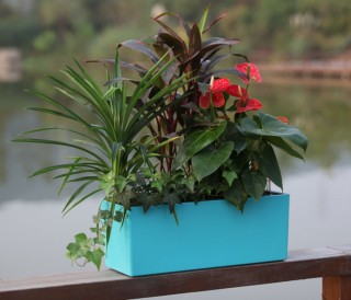 Glossy Rectangle Balcony Flower Planters WB-01 | GreenPlanet Kerala