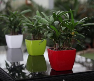 Mini Dumpy Square Self Watering Pots HG-3107 | GreenPlanet Kerala